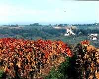 Vignobles à l'Automne, près de Madaillan